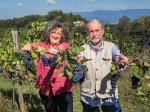 """Barsaglina, Foglia Tonda e Lacrima del Valdarno. Una """"nuova agricoltura"""" nel segno dei vitigni autoctoni toscani"""
