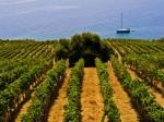 consorzio-tutela-vino-doc-sicilia