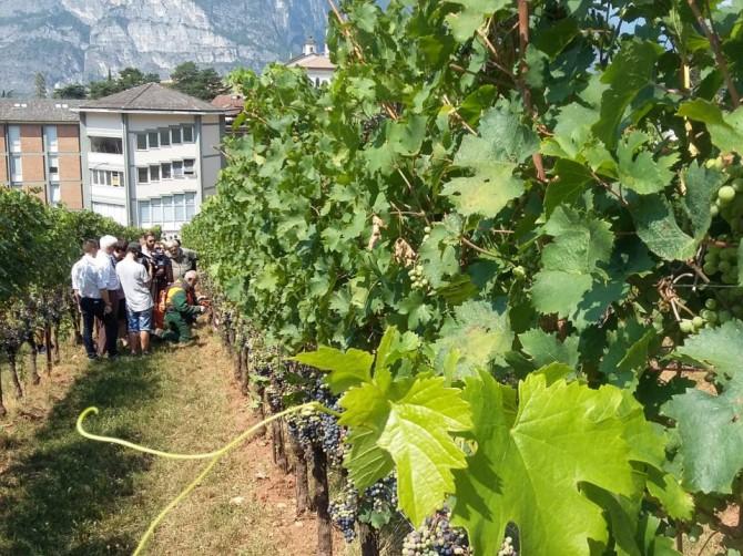 viticoltura-bio