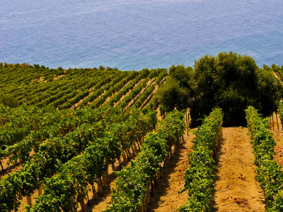 vini-doc-sicilia