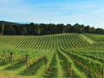 consorzio-vini-venezie