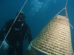 elba-uva-in-immersione