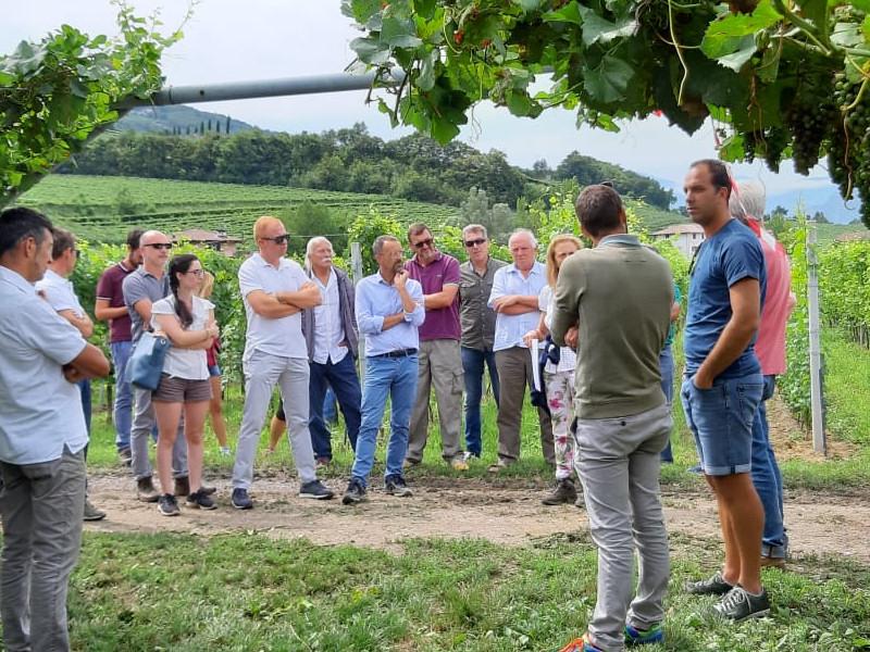 viticoltura-bio-2019