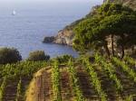 consorzio-vini-maremma-toscana-argentario