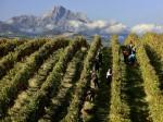 vino-montepulciano-abruzzo