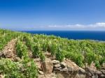 consorzio-vini-maremma-vigneto