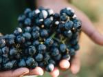 venturini-baldini-wines